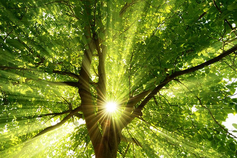 immagine solare termico